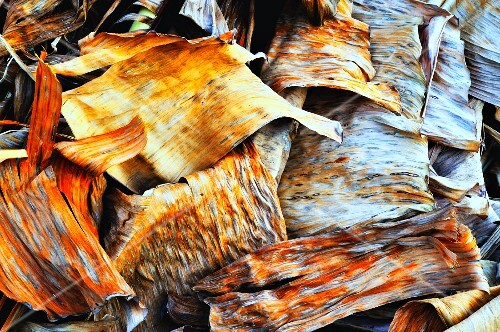 Tree bark and leaves