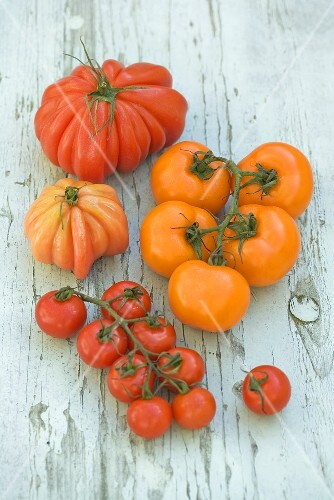 Various varieties of tomatoes