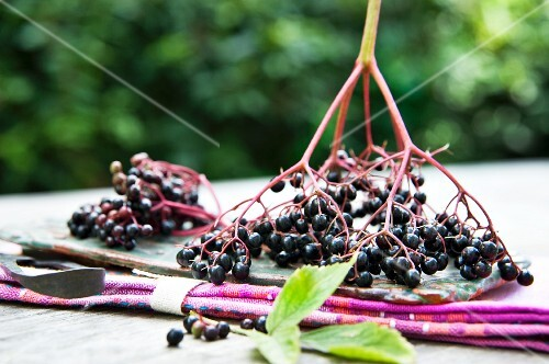 Elderberries on a garden table