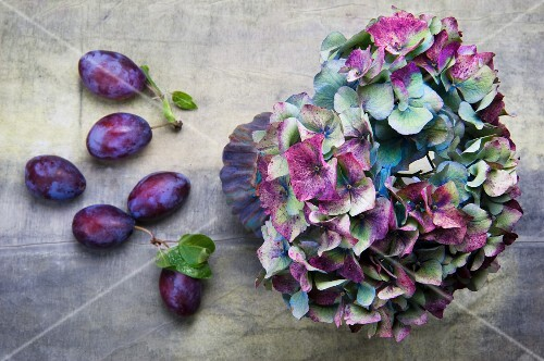Hydrangeas and plums
