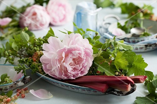 Pink peonies, currants and rhubarb