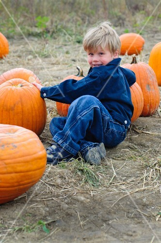 A little boy sitting amongst pumpkins