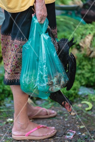 A woman carrying full plastic bags and a live chicken at a market in Vientiane, Laos