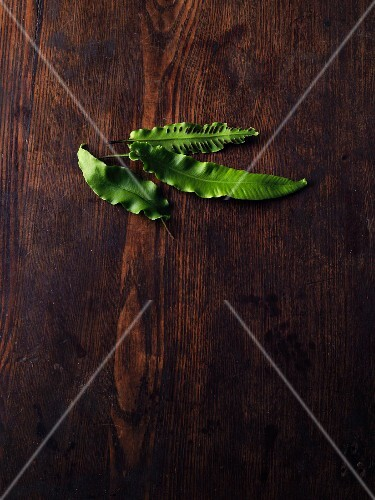 Hart's-tongue fern on a wooden surface