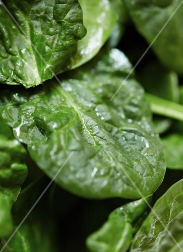 Fresh spinach leaves (close up)
