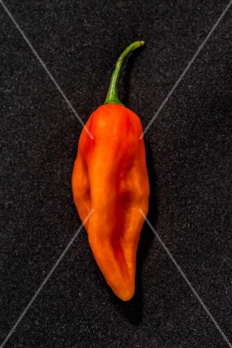 A Sbs Demon chilli pepper