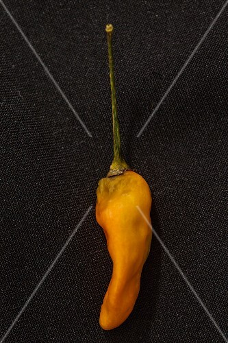 A Tabanaga chilli pepper