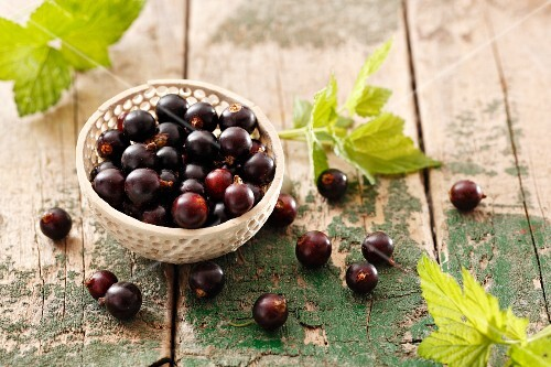 Blackcurrants and blackcurrant leaves