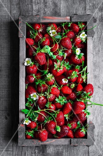 Fresh strawberries with flowers in a wooden crate