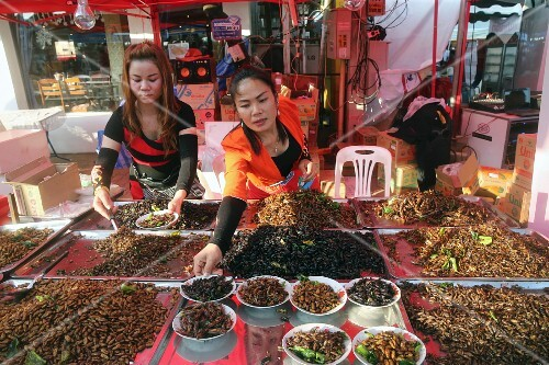 A fast food stand selling fried insects at a market in Vientiane, Laos