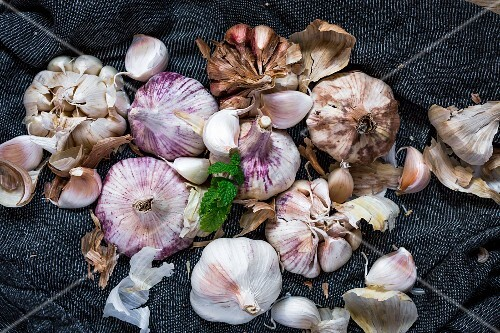 Purple garlic on a towel with herbs