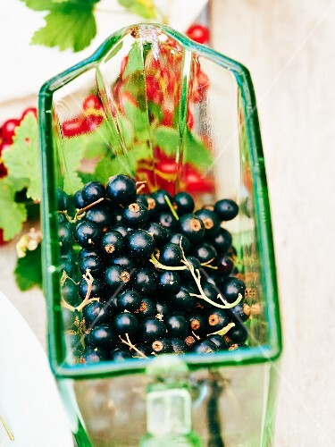 Fresh blackcurrants on a glass scoop