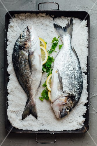 Two raw gilt-head bream in a bed of salt (seen from above)