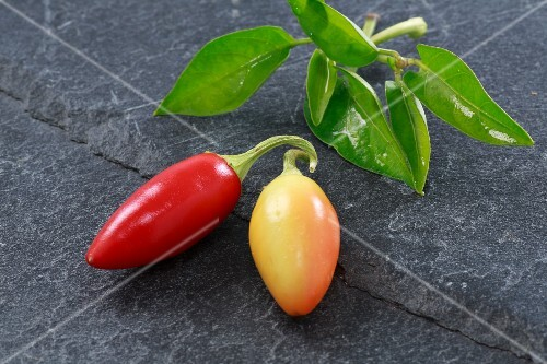 Two fresh chillies from Vietnam