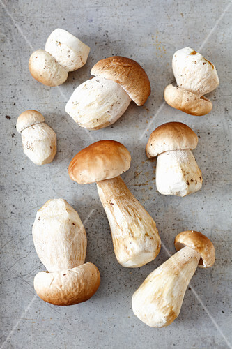 Several fresh porcini mushrooms (seen from above)