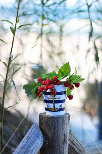 Sprigs with right raspberries in a maritime porcelain container on a fence post