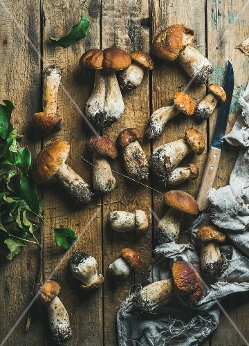 Fresh uncooked white forest mushrooms of different sizes, knife and tree branch with green leaves