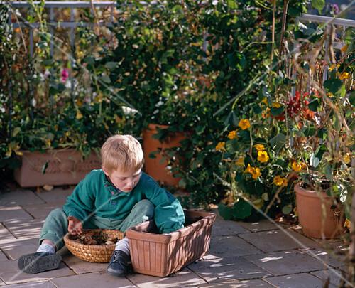 ein junge pflanzt tulpenzwiebeln f r den bild kaufen. Black Bedroom Furniture Sets. Home Design Ideas