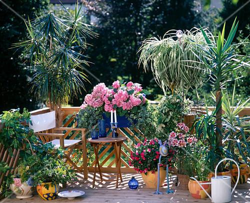 zimmerpflanzen in der sommerfrische bild kaufen. Black Bedroom Furniture Sets. Home Design Ideas