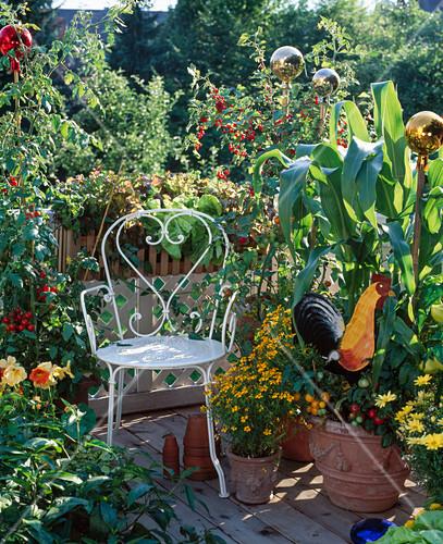 b uerlicher balkon tomaten johannisbeeren bild kaufen. Black Bedroom Furniture Sets. Home Design Ideas