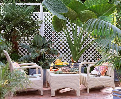 tropischer blattschmuck trachycarpus musa arcuminata banane alocasia elef bild kaufen. Black Bedroom Furniture Sets. Home Design Ideas