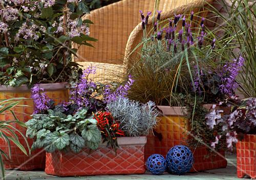 clematis heuchera helichrysum capsicum cotoneaster. Black Bedroom Furniture Sets. Home Design Ideas