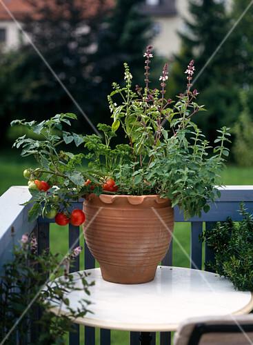 men im topf tomate petersilie bild kaufen friedrich strauss gartenbildagentur. Black Bedroom Furniture Sets. Home Design Ideas