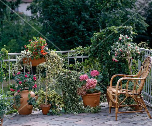 balkon mit efeu impatiens begonie fuchsie bild kaufen. Black Bedroom Furniture Sets. Home Design Ideas