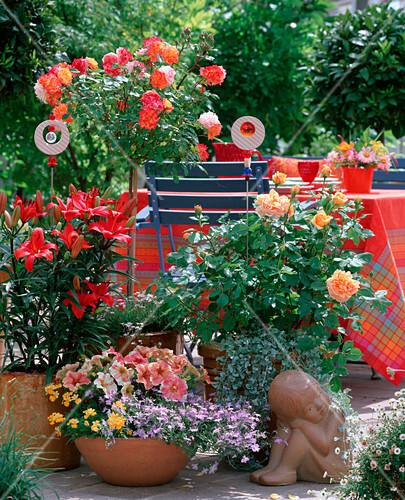 Rosa baby maskerade charles austin rosen lilium asiatische bild kaufen friedrich - Asiatische zimmerpflanzen ...