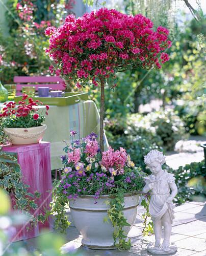 rhododendron toreador japan azalee stamm bild. Black Bedroom Furniture Sets. Home Design Ideas