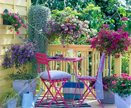bougainvillea solanum enzianbaum bild kaufen. Black Bedroom Furniture Sets. Home Design Ideas
