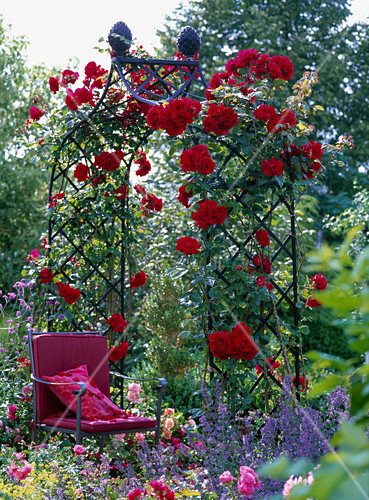 rosenbogen mit rosa santana kletterrose bild kaufen friedrich strauss gartenbildagentur. Black Bedroom Furniture Sets. Home Design Ideas