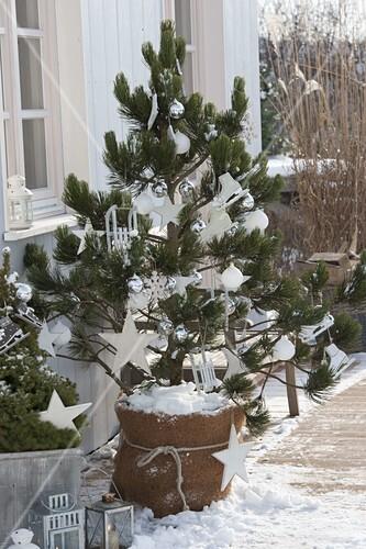 koniferen auf der terrasse weihnachtlich dekoriert bild kaufen friedrich strauss. Black Bedroom Furniture Sets. Home Design Ideas