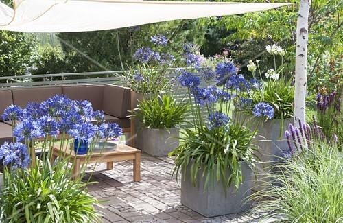 mit sonnensegel schattierte terrasse k bel mit agapanthus. Black Bedroom Furniture Sets. Home Design Ideas