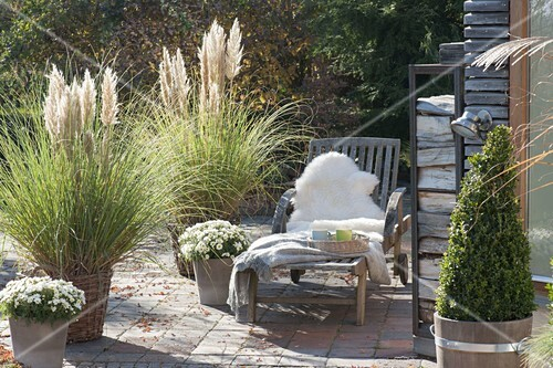 herbst terrasse mit gr sern cortaderia selloana pampasgras in koerben bild kaufen. Black Bedroom Furniture Sets. Home Design Ideas