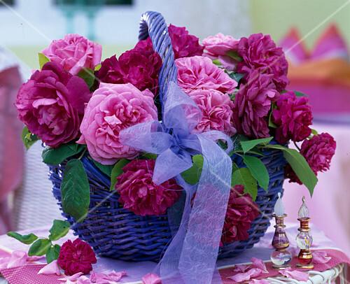 blauer korb mit rosa historischen duftrosen bild kaufen friedrich strauss gartenbildagentur. Black Bedroom Furniture Sets. Home Design Ideas