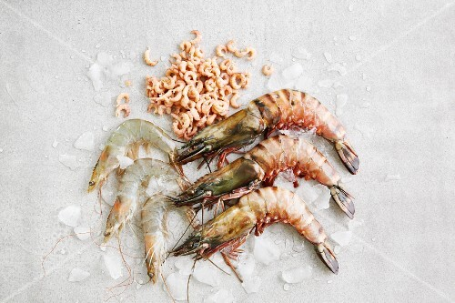 An arrangement of different prawns