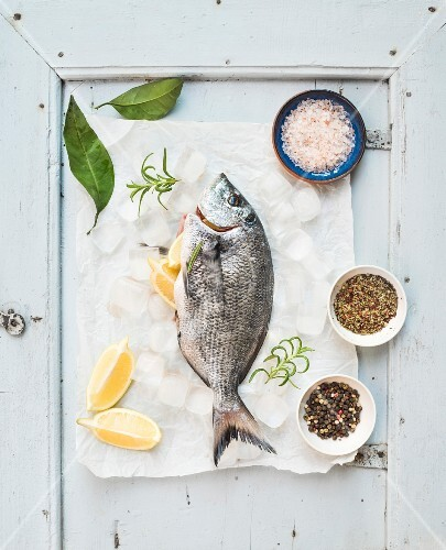Fresh uncooked sea bream fish with lemon, herbs, ice and spices on rustic blue wooden board backdrop