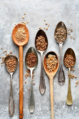 Common wheat, einkorn, emmer wheat, spelt, kamut and rye on spoons