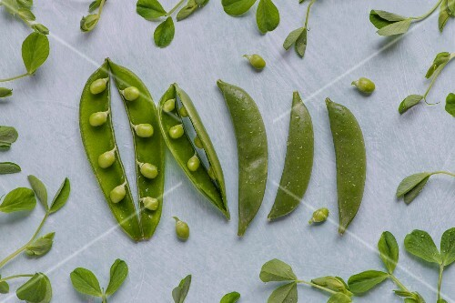 Pea pods and pea shoots, view from above