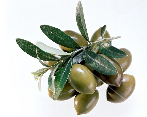 Green Olives; Leaves