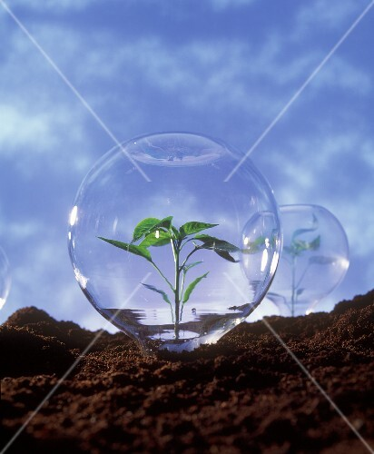 Plant protection: young plant under glass dome (2)