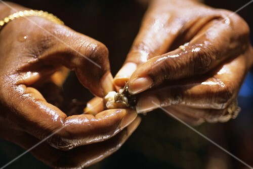 Yett (dried shellfish, Senegal) in two hands
