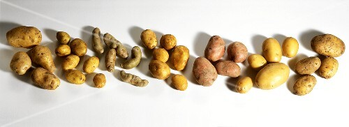 Various varieties of potato