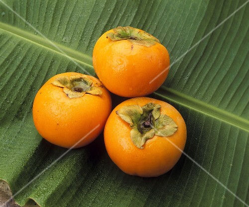 Three Sharon fruits on a palm leaf