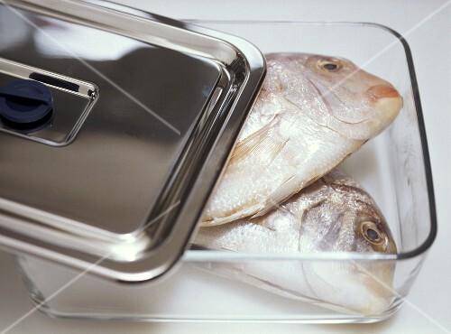 Fische in einem glasbeh lter frisch halten bild kaufen for Fische halten