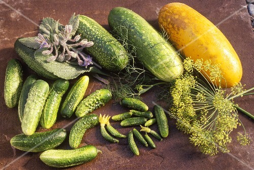 Various pickled and mustard-pickled gherkins