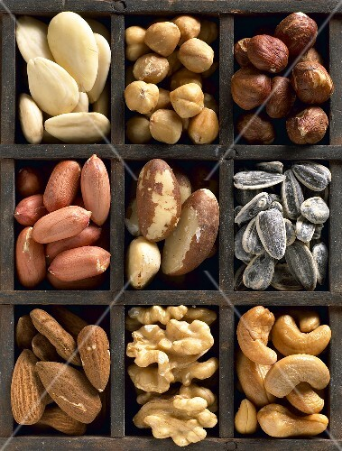 Various nuts and seeds in type case (overhead view)