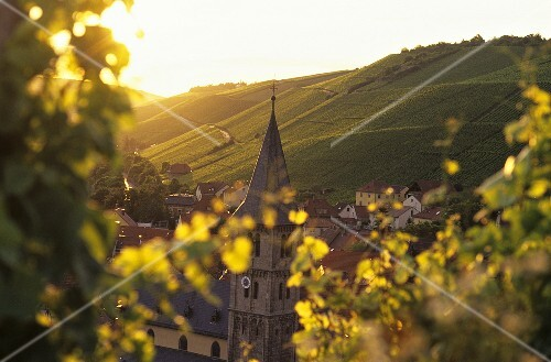 Wine-growing around Randersacker, Franconia, Germany