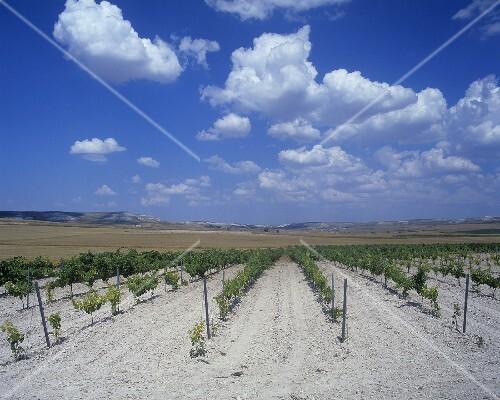 Chalky soil near pesquera de duero ribera del duero for Soil near me